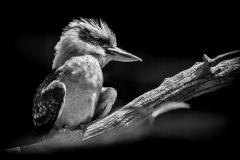Cape-May-Zoo-May-2016-Jason-Gambone-256