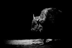 Cape-May-Zoo-May-2016-Jason-Gambone-48
