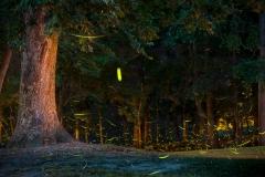 Forest-Lightning-July-2016-Jason-Gambone-382