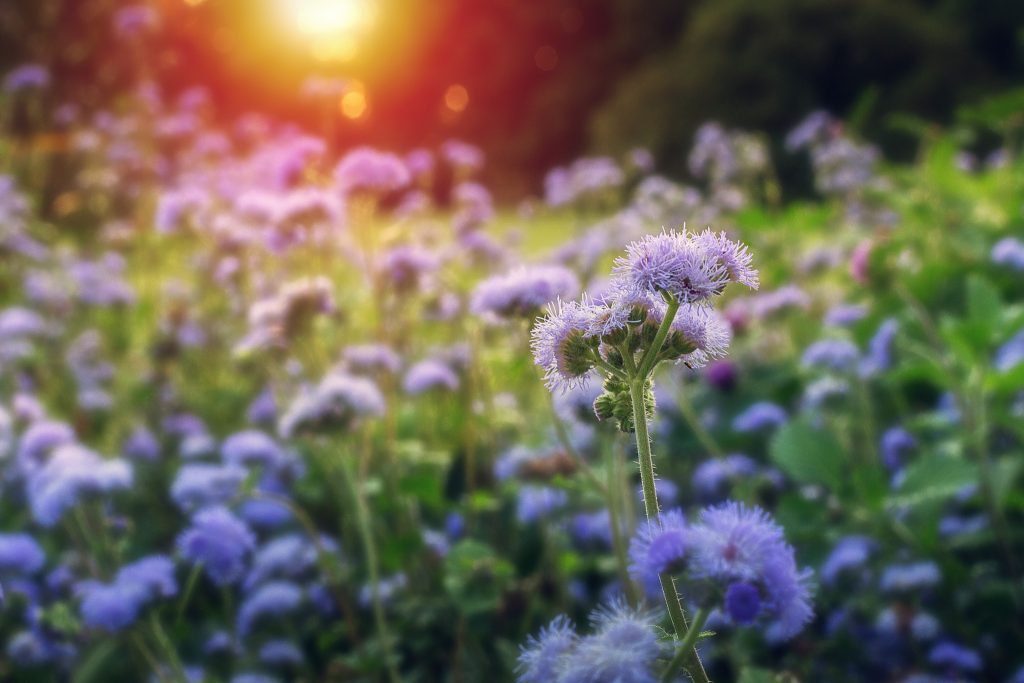 Swept-Over-Longwood-Gardens-Jason-Gambone-1024x683.jpg