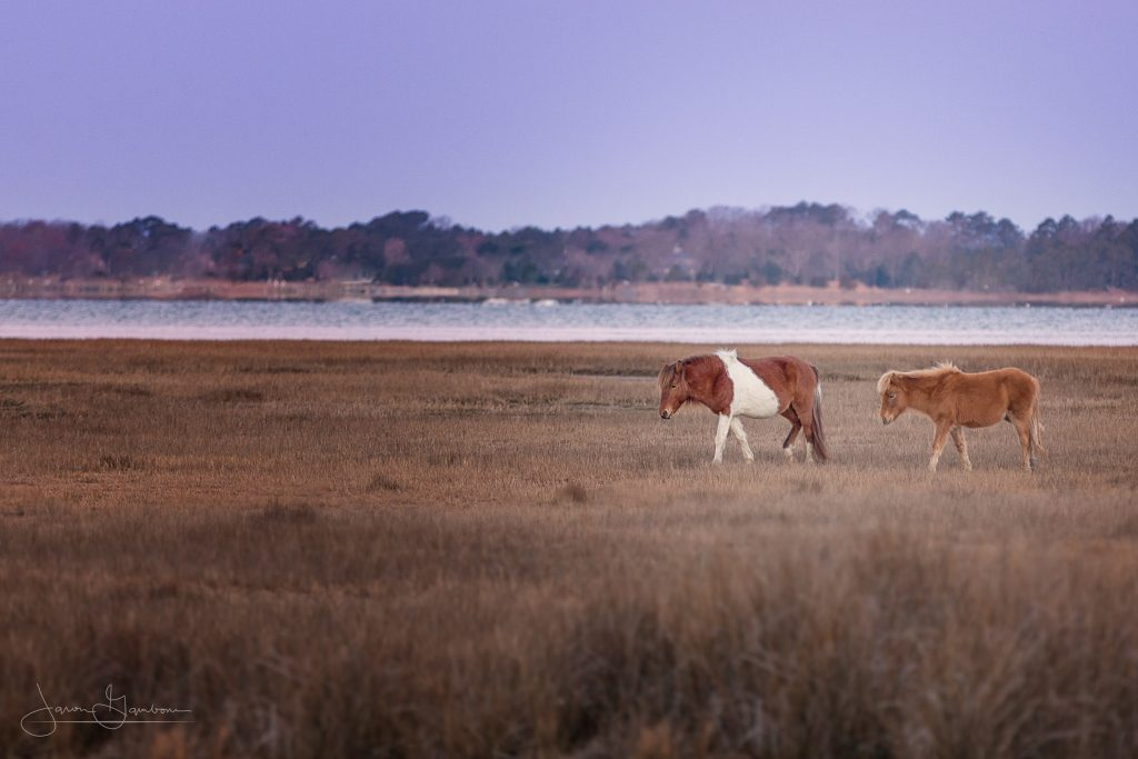 Assateague-March-2017-Jason-Gambone-421-PSedit-1-1024x683.jpg