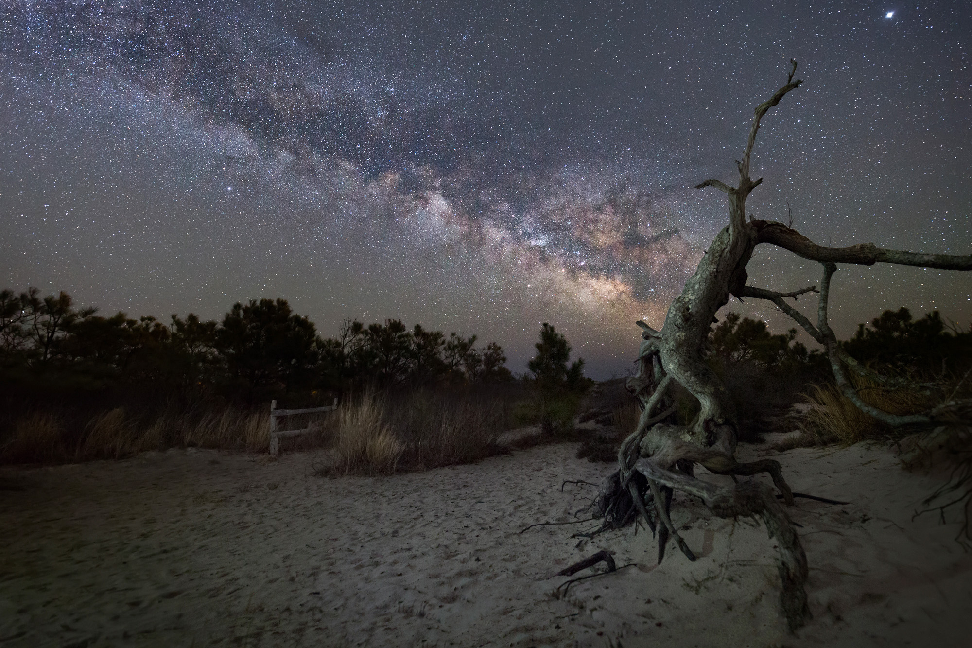 Assateague Island Maryland